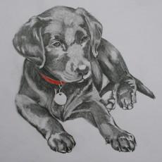 drawings 003
