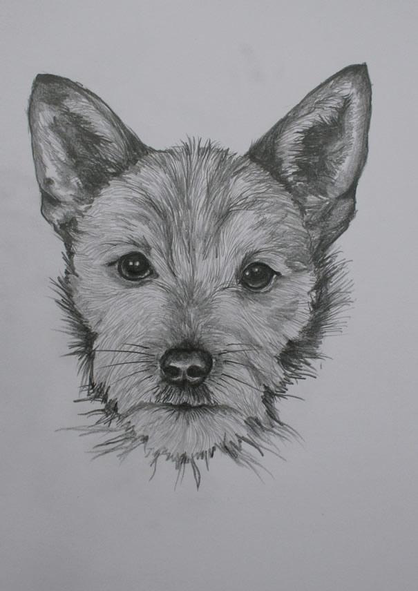 drawings 005